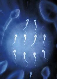 A spermiumok fogyásának mozgékonysága,